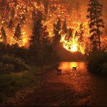شکست رکورد آتش سوزی در جنگل های کشور روسیه
